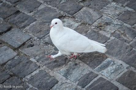 A Johnnie Walk-ing pigeon.