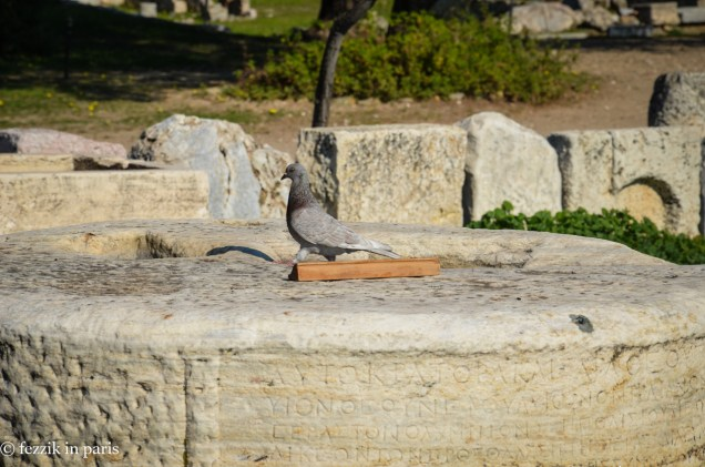 """The sign that this pigeon is sassily prancing around reads """"Do Not Touch."""""""