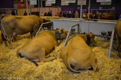 These are dapper cows.