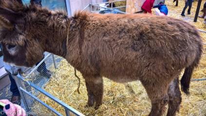 A hairy donkey.