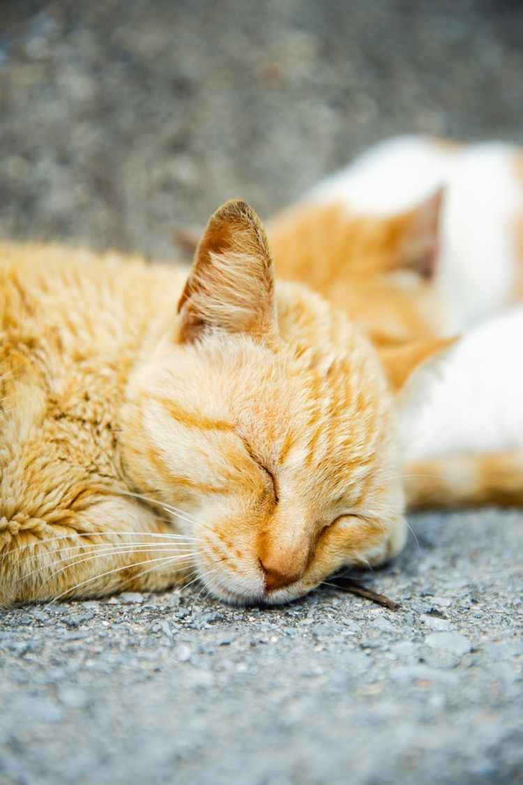 adorable cats sleeping on street in shiny daylight