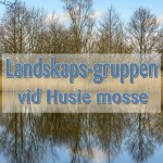 Landskaps-gruppen på Husie Mosse
