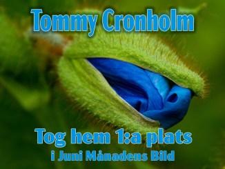 Vinnande Bild i Juni Månadens Bild - fotograf Tommy Cronholm