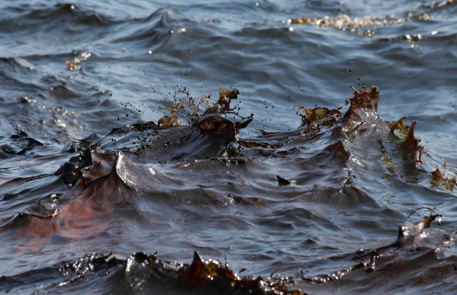 FFOS: Trinidad fishery polluted | dolphins swimming in oil spill Corexit 9500