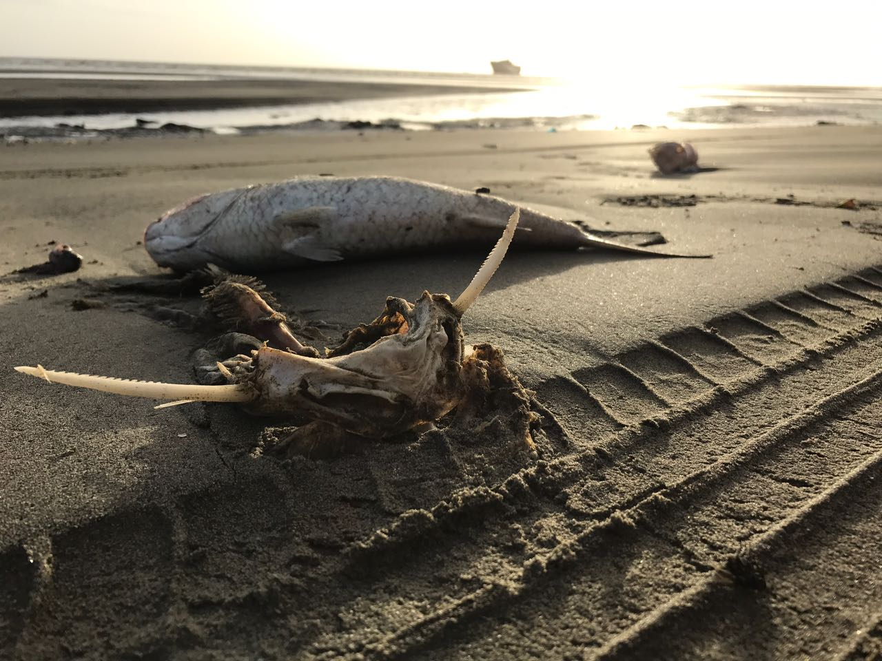 Official Statements on the La Brea Fish Kill Investigation