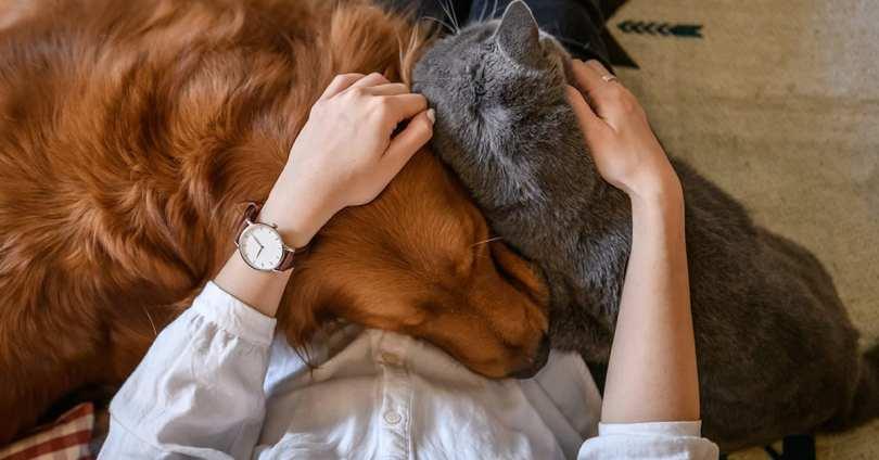 #FFPAnimaleVétérinaire Utiliser des outils, séduire, être triste… Animaux et humains partagent plus qu'on ne le croit @Europe1 – Fédération Française de la Protection Animale