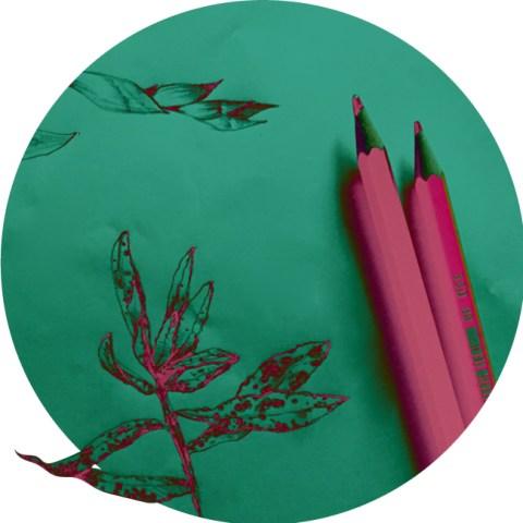 paca-illustration-illustrateur-dessinateur-freelance-bic-herbier-croquis