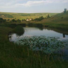 ffynnon-abertysswg-duck-pond