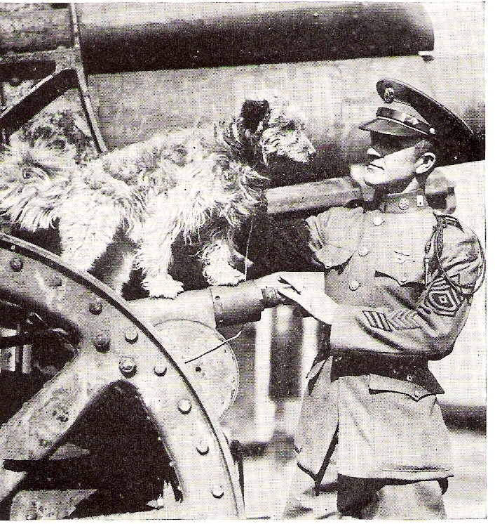 World War I dog hero