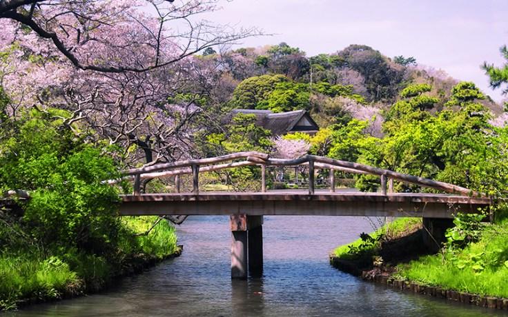 a bridge in the sankeien gardens.