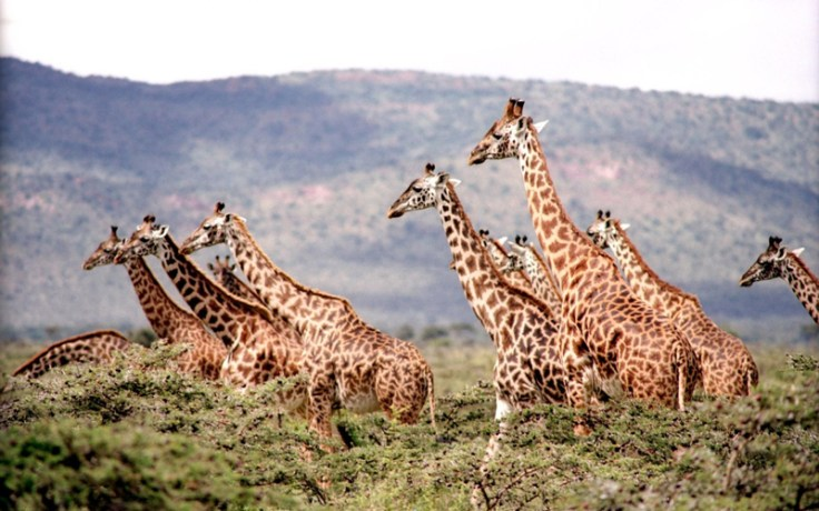 African Safari - Visit the safari from home using a virtual tour