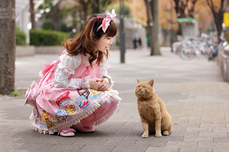 a young girl in lolita japanese fashion posing next to a cat