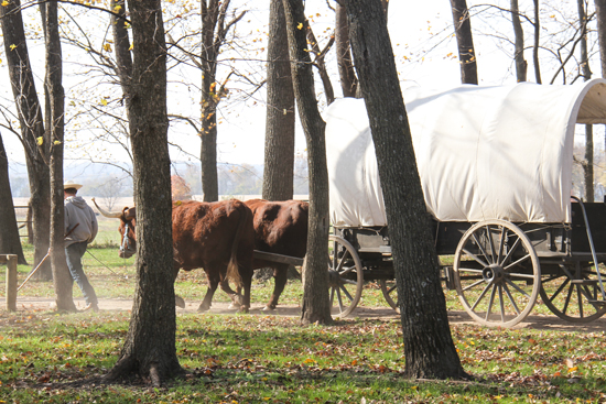 Oxen, horses, and wagons were easy to come by in the Oregon Trail game, but they could become scarce on the real trail.