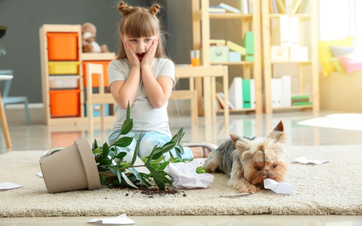 Little girl looks at dog who made mess