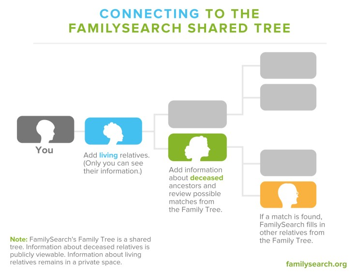 Graphic showing how to connect to the FamilySearch shared tree.