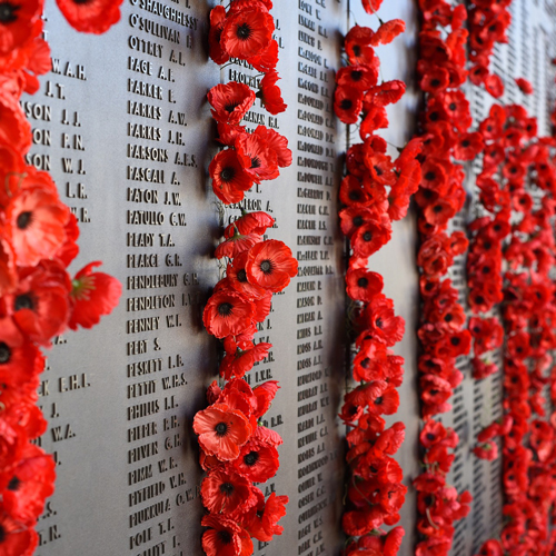 Poppies, remembrance day,