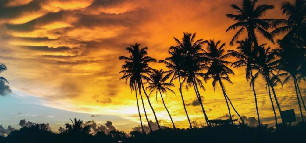 A row of back-lit palm trees pictured during the golden hours of sunset.
