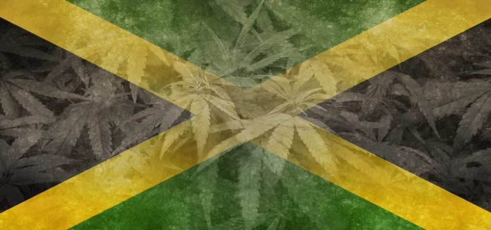 The flag of Jamaica in a digital collage with cannabis plants and leaves in the background.