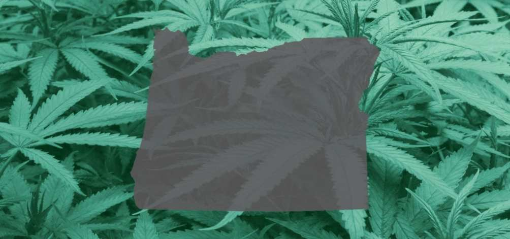 A vector image of the state of Oregon spliced over an indoor cannabis grow's thick foliage.