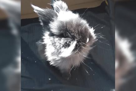Pets of FHCI: Benny