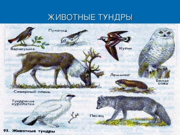 урок окружающего мира в 4 классе растения и животные ...