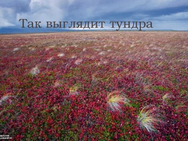 """Презентация на тему """"Растения и животные тундры"""""""