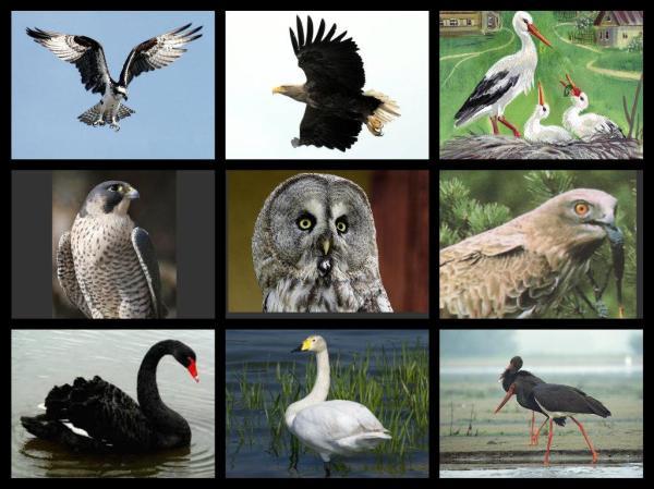 """Окружающий мир. Клипарт """"Охраняемые птицы"""