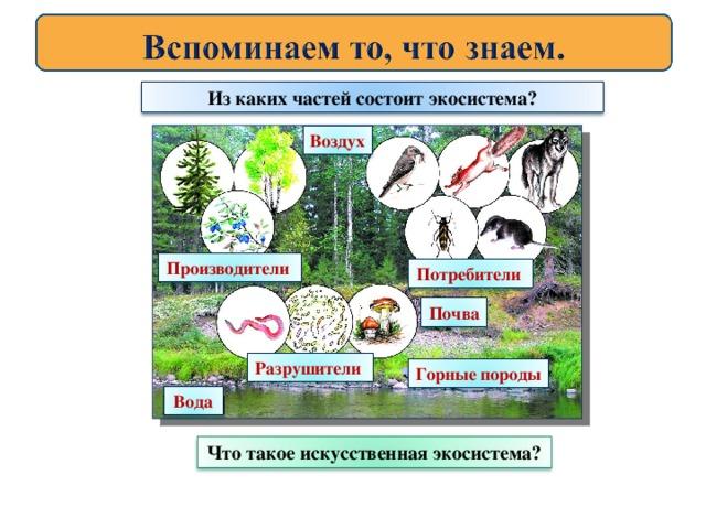 лабораторная работа по биологии аквариум как девушка модель экосистемы