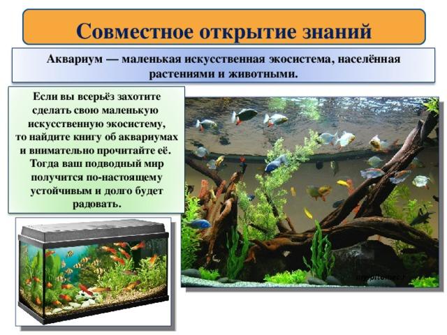 лабораторная работа аквариум как девушка модель экосистемы практическая работа