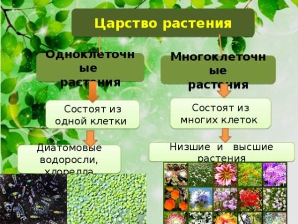 """Презентация по биологии 5 класс на тему : """"Царство Растений""""."""