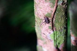 Parasitärer Pilz - Fernsteuerung für Käfer