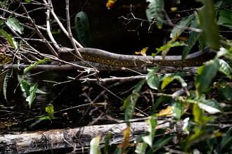 Anaconda - ziemlich klein