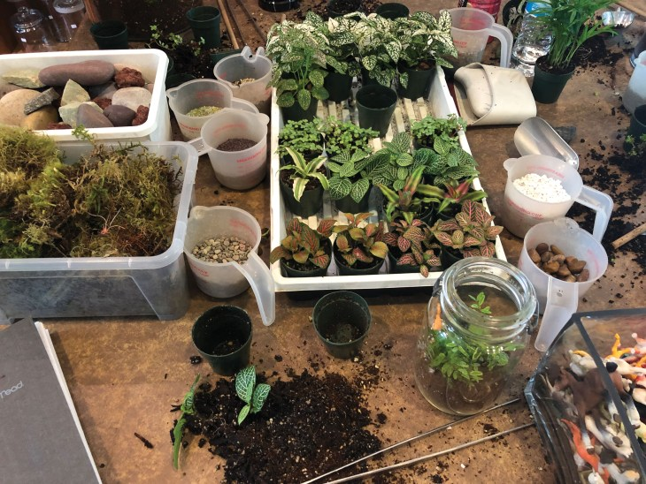 Roosevelt S Terrariums The Franklin Post