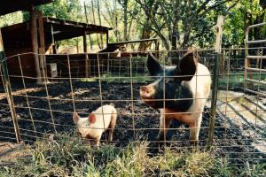 Classroom Insider: Farm and Ranch