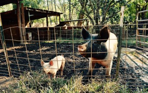 Classroom Insider: Farm and Ranch