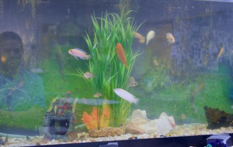 Classroom Insider: Aquaculture and Agriculture