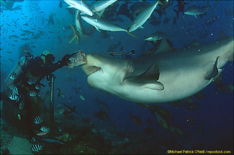 Beqa Adventure Divers