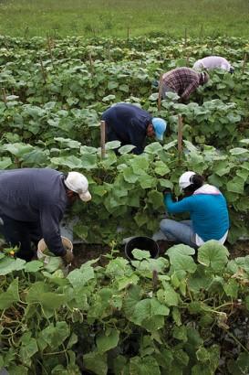 Migrant farm workers in Virginia