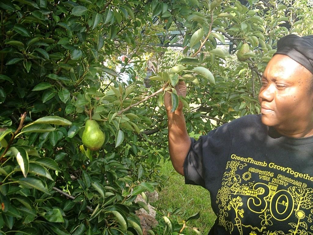 Brenda Thompson Duchene, an Aruba native, manages 3 community gardens in Brownsville, Brooklyn. Photo by Manolia Charlotin