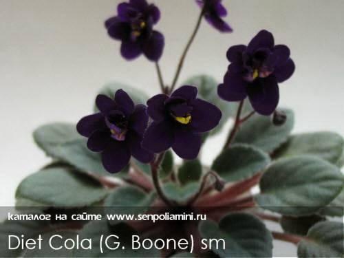Фиалки на подоконнике | Diet Cola (G. Boone).