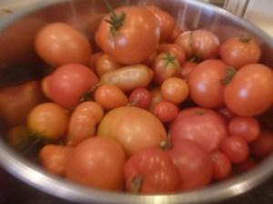 P1020268 tomatoes