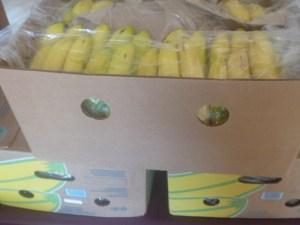 P1020301 3 boxes bananas