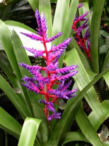 Purple Red Plant