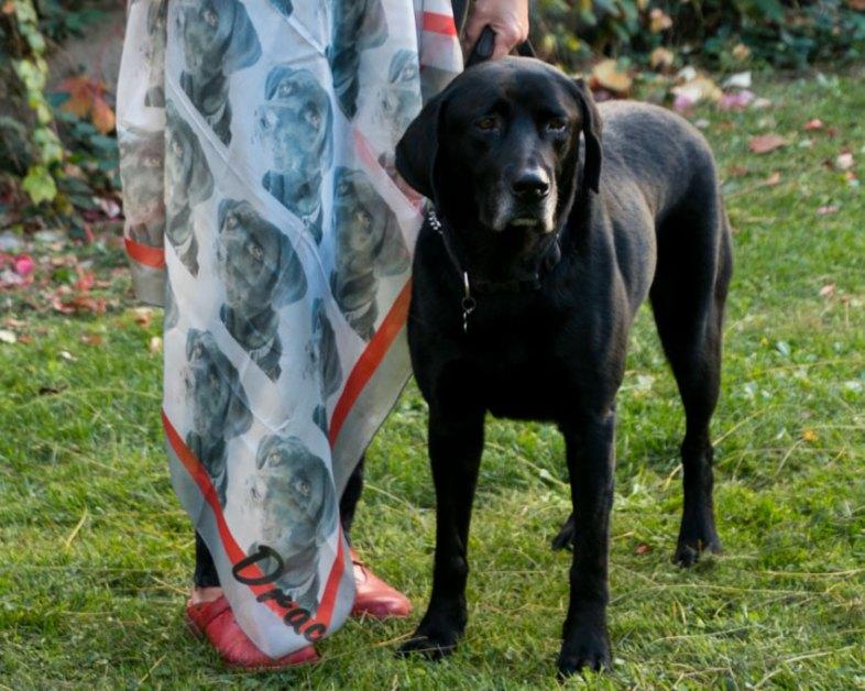 foulard personnalisé avec photo chien labrador