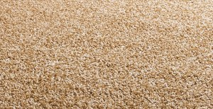 10 point guide to caring for your carpets