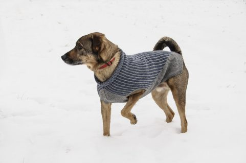 Bird Island Dog Sweater by Sys Fredens. (© blue sky fibers)