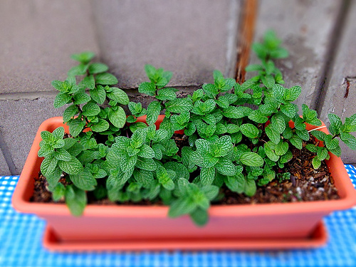 Does Spearmint Tea For PCOS Natural Treatment Work?