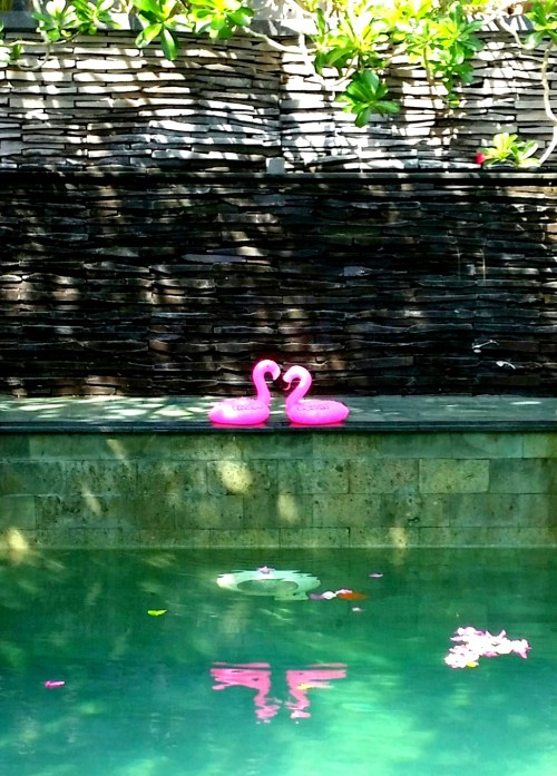 flamingoes 1