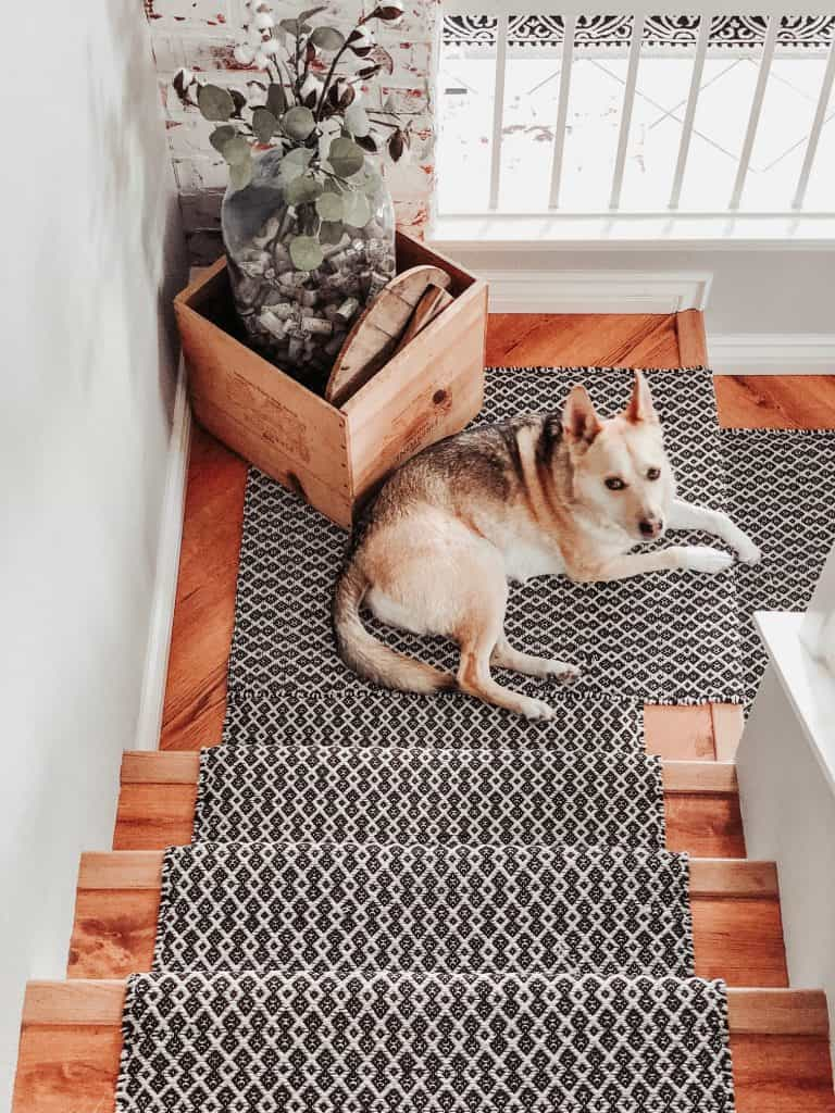 Carolina dog sitting on landing of stairs with black and white stair runner and eucalyptus in large vase in corner