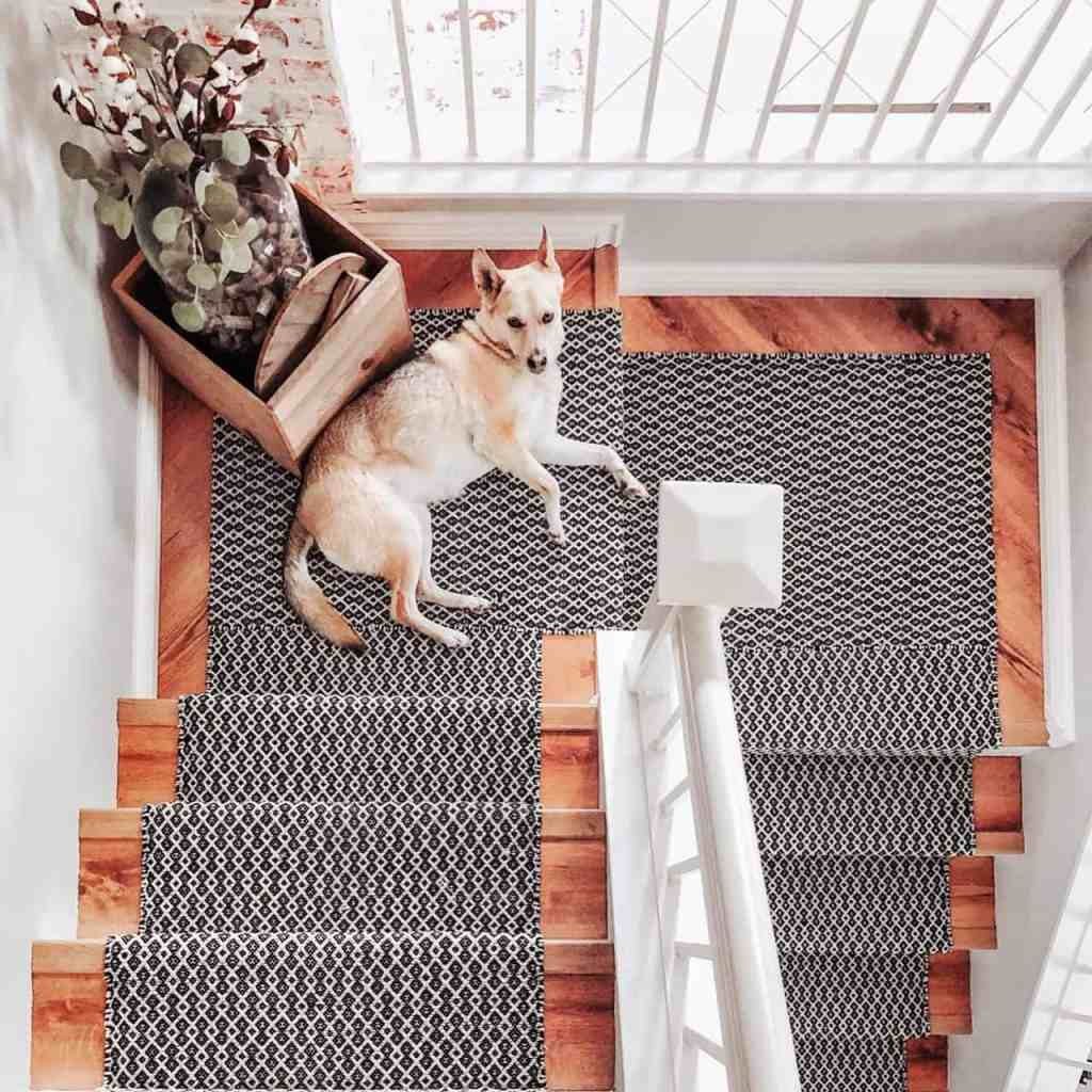 overhead shot of Carolina dog laying on DIY black and white carpet stair runner